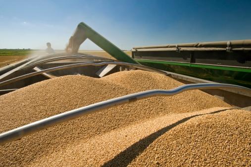 A Grain Wagon Unloads Winter Wheat Into A Truck, Nesbitt, Manitoba, Canada